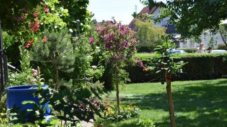 900 Quadratmeter groß ist der Garten von Hans Hubel. Darin finden sich viele Stauden, Obstbäume, Gemüsebeete und jede Menge Kübelpflanzen. Beim Tag der offenen Gartentür in Schwaben öffneten zwei Baldinger ihre Türen.