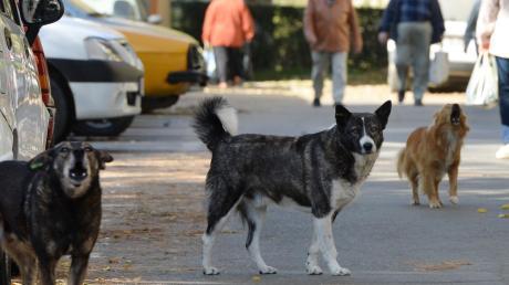 Der Verein Streunerhunde holt notleidende Hunde aus Rumänien ins Ries.