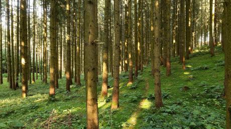 Im Wald in Hohenaltheim wurden Schlachtabfälle illegal entsorgt.