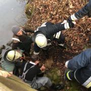 Gerettet: Ein steiler Abhang ist einem Schaf in Oettingen am Wochenende zum Verhängnis geworden. Die Feuerwehr rettete das Tier.
