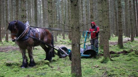 Kaltblut Donny zieht in diesen Tagen einen Spezialpflug durch den Wald in der Nähe von Diemantstein. Robert Schmidt hat den Pflug entwickelt.