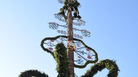 Ein wunderschönes Exemplar aus Balgheim: Dieses Archivoto zeigt den Maibaum des Ortes von 2018. In diesem Jahr hat das Landratsamt das Aufstellen von Maibäumen sowie Maifeiern untersagt.