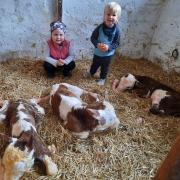 Große Freude: Die drei Kälber sind nach ihrer Geburt wohlauf. Darüber sind auch die Enkelkinder  Leni und Leonhard der Familie Schneid, die auf dem Eulenhof wohnt, sichtlich froh.