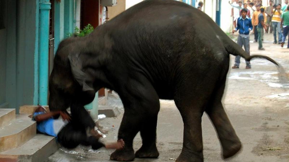 tiere elefant t tet zwei menschen in nepal promis kurioses tv augsburger allgemeine. Black Bedroom Furniture Sets. Home Design Ideas