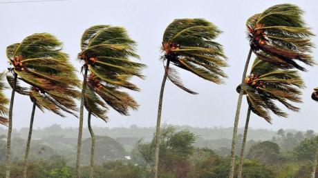 Sturmgepeitschte Palmen: Ein Zyklon hat auf Madagaskar fast 190 000 Menschen obdachlos gemacht. Foto: Alejandro Ernesto/Archiv