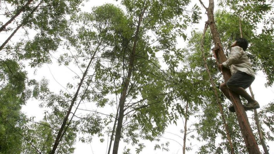 Wissenschaft: Geld wächst nicht auf Bäumen - Gold schon