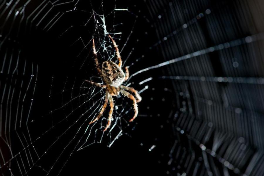 Spinne Aufsaugen