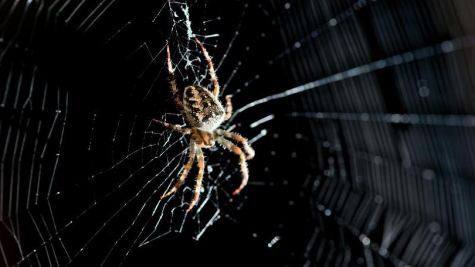 Wissenswertes Im Haushalt Sterben Spinnen Im Staubsauger Promis
