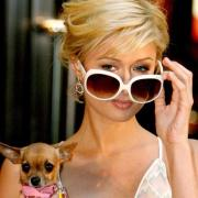 Paris Hilton mit Hündchen Tinkerbell 2005 in New York. Foto: Justin Lane