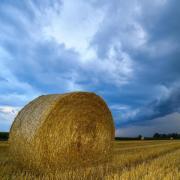 Am Wochenstart bleibt es weitgehend trocken, außer im Südwesten. Foto: Patrick Pleul