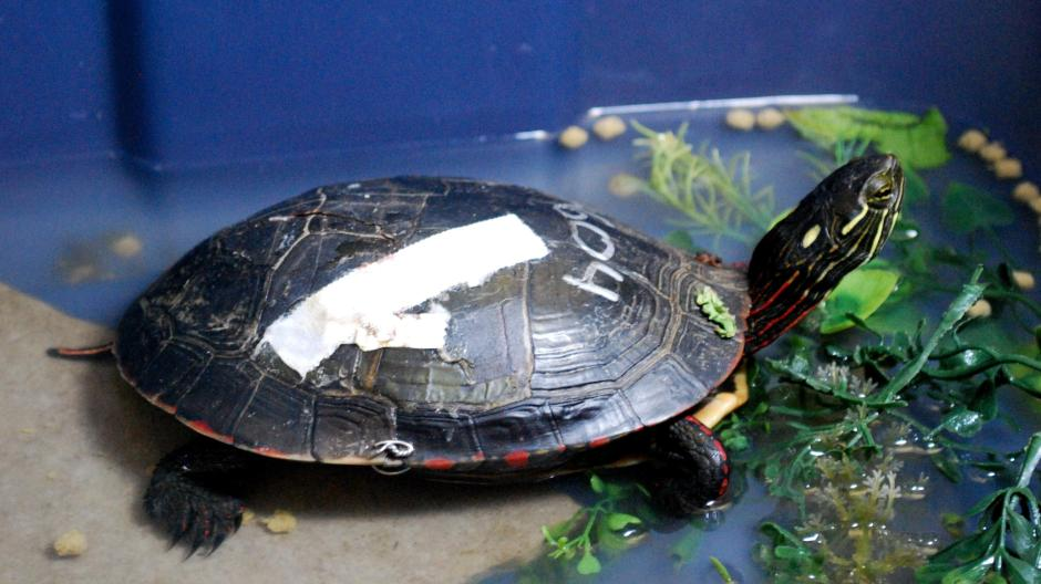 Fußboden Im Krankenhaus ~ Im krankenhaus für schildkröten promis kurioses tv augsburger