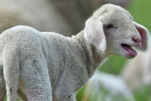 Kennzeichnung bei Fleisch: Rewe zieht nach, Edeka zögert