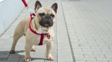 In Wallerstein ist eine Postbotin von einem Hund gebissen worden. (Symbolbild)