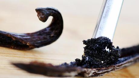 Mit einem Löffelstiel wird das Vanillemark einer Vanilleschote herausgeschoben. Vanille zählt zu den teuersten Gewürzen der Welt. Foto: Roland Weihrauch