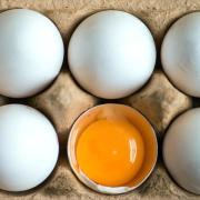 Belastete Eier sollen in Niedersachsen, Baden-Württemberg, Hessen, Bayern, Schleswig-Holstein und Nordrhein-Westfalen verkauft worden sein. Foto: Armin Weigel