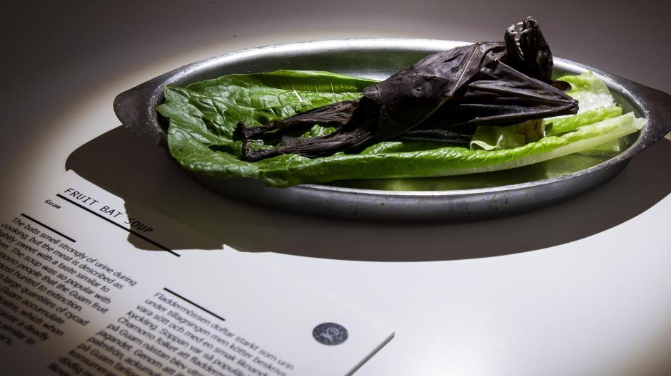 Schweden: Museum für ekliges Essen eröffnet in Malmö | Augsburger Allgemeine