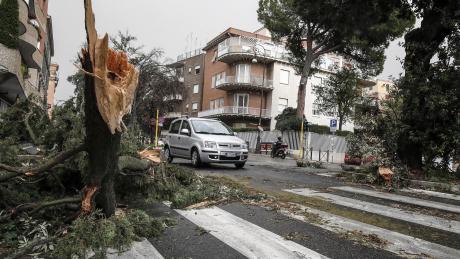 Ein Baum liegt in Rom auf einer Straße, nachdem er von starken Winden niedergerissen wurde.