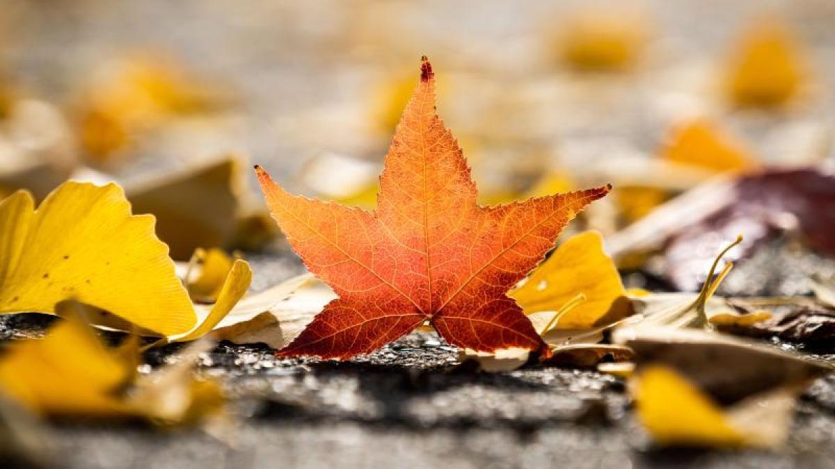 Wann ist Herbstanfang 2021 (meteorologisch und kalendarisch)?