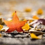 Wann ist Herbstanfang? Warum gibt es einen kalendarischen und einen meteorologischen Herbstbeginn? In diesem Artikel finden Sie die Antworten.