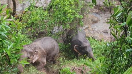 Elf Elefanten sind in Thailand ertrunken, bei dem Versuch ein Jungtier zu retten.