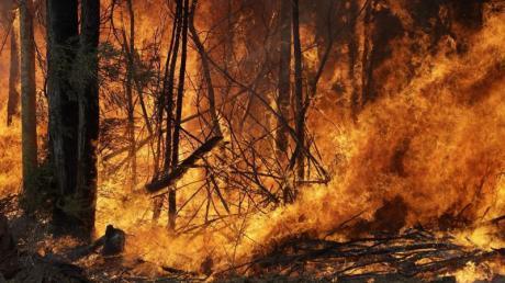Seit Beginn der großen Buschfeuer im Oktober verbrannten in Australien mehr als zehn Millionen Hektar Land.