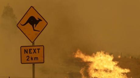 Die verheerenden Buschbrände haben nicht nur den Menschen schwer zugesetzt, sondern auch den Tieren. Die Waldbrand-Saison ist nun beendet.