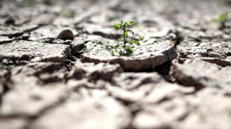 Es regnet zu wenig: Viele Böden auf der Welt sind rissig und ausgetrocknet.