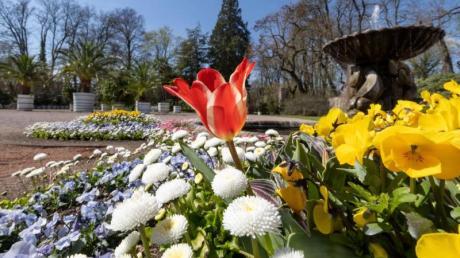 Orangerie sowie Lust- und Irrgarten gehört zu den 25 Außenstandorten der BUGA2021.