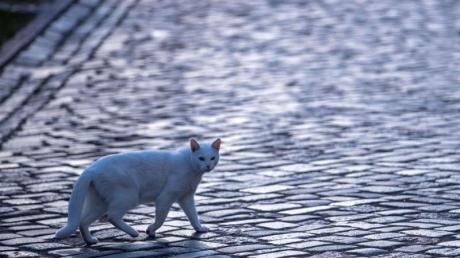 Katze mit Gefühlen: Die britische Regierung will das Land zum Vorreiter bei Tierrechten machen. (Symbolbild).