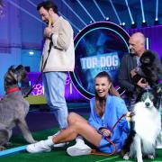 """""""Top Dog Germany"""": Sendetermine, Sendezeit, Hunde, Halter, Übertragung im TV & Stream. Von links: Jan Köppen, Laura Wontorra und Frank Buschmann."""