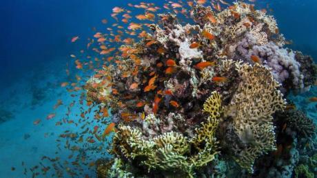 Das Great Barrier Reef vor der Ostküste Australiens ist größer als Italien.