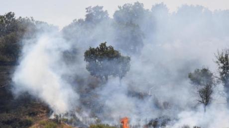 Lodernde Flammen in einem Pinienwald an den Hängen des Ätnas.