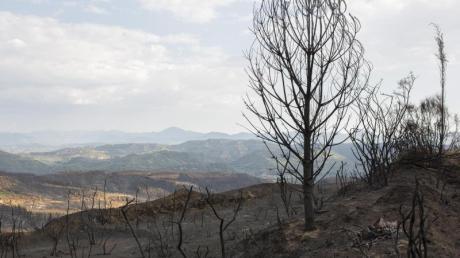Verbrannte Landschaft in der Nähe von Lalas, unweit von Olympia.