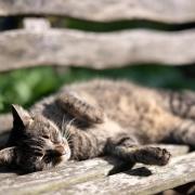 Katzen sollte man nicht aus dem Tiefschlaf wecken.