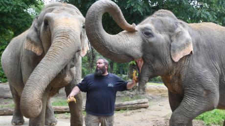 Pfleger Gary hat zu Burma (links) und Targa einen speziellen Draht. Bekommt der Zoo in Augsburg nun weitere Elefanten?