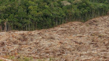 Abholzung des Regenwalds im Amazonasgebiet in Brasilien. Foto: Marcelo Sayao/EFE
