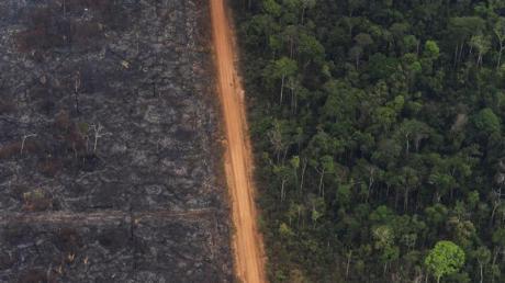 Blick auf ein Waldgebiet, in dem der linke Teil des Waldes durch Waldbrände komplett zerstört wurde.