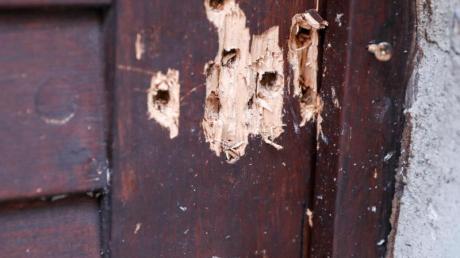 Die Tür der Synagoge in Halle zeugt von den Schüssen des rechtsextremen Attentäters. Foto: Jan Woitas/zb/dpa