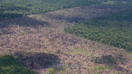 Luftblick auf abgeholzte Fläche des Amazonas. Die Zerstörung im brasilianischen Amazonas-Gebiet nimmt im Schatten der Covid-19-Pandemie dramatisch zu.