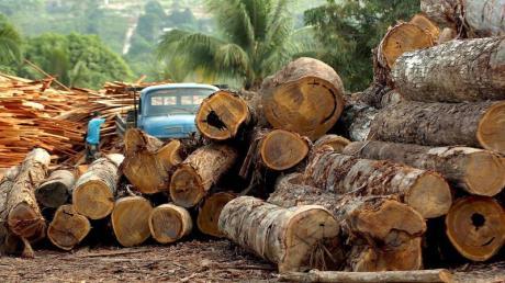 Eine Holzfabrik in Brasilien. Bundesumweltministerin Schulze hat sich für ein Lieferkettengesetz ausgesprochen, das deutsche Unternehmen zur Einhaltung von Menschenrechts- und Umweltstandards auch bei Zulieferfirmen im Ausland verpflichtet.