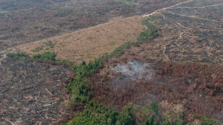 Verbrannte Waldfläche auf einem vom brasilianischen Institut IBAMA zur Verfügung gestellten Archiv-Bild.