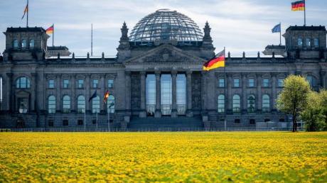 Löwenzahn blüht auf der Wiese vor dem Reichstagsgebäude in der Morgensonne. (Archivbild).