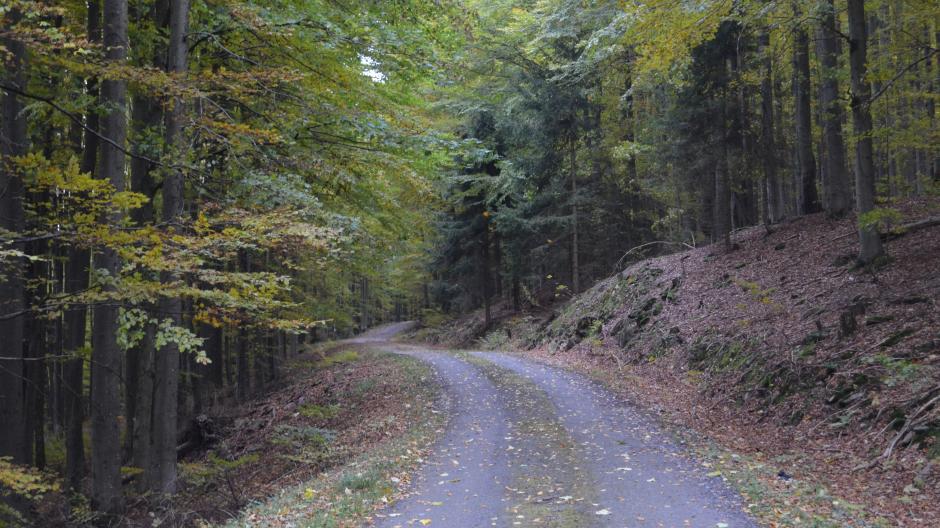 """Im Böhmerwald wachsen die Bäume unheimlich dicht, die Hänge sind felsig und steil. """"Hier sieht man den Wald vor lauter Bäumen nicht"""", sagt Dominik Schönberger von der Bergwacht Furth im Wald."""