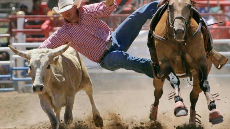 Rodeo hat im Westen der USA eine große Tradition. In Arizona findet in diesem Jahr bereits zum 130. Mal das größte Rodeo-Fest der Welt statt.