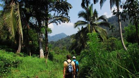 Sri Lanka bietet mehr als traumhafte Strände - im Hinterland lassen sich zum Beispiel auch Touren durch den Sinharaja-Regenwald unternehmen.