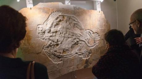 Bei wissenschaftlichen Grabungen in Wattendorf entdeckten Forscher 2018 das Fossil einer 1,40 Meter großen Schildkröte aus der Jura-Zeit. Es ist nun im Naturkundemuseum in Bamberg ausgestellt.