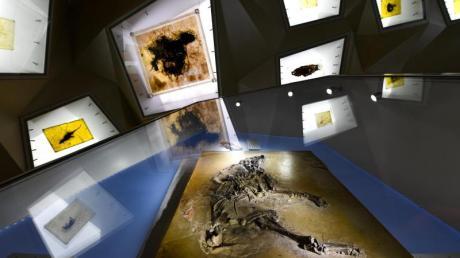 Ein fossiles Urpferdchen (vorn) gehört zu den wertvollen Funden aus der Grube Messel, die in der Schatzkammer des Besucherzentrums ausgestellt sind. In dem meterdicken, feingeschichteten Ölschiefer erzählen Fossilien, wie die Welt vor 48 Millionen Jahren aussah.