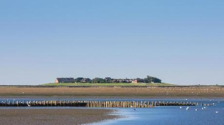 Die Hallig Oland im Nationalpark Schleswig-Holsteinisches Wattenmeer ist Ziel von Wattwanderungen.