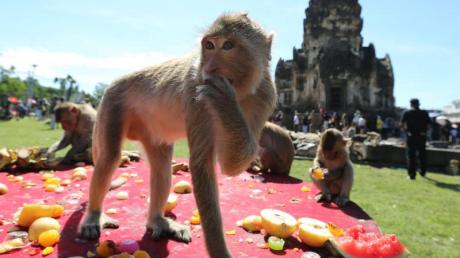 Längst sind die Affen in Lopburi den Einheimischen überdrüssig.