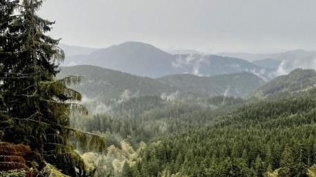 Der Nationalpark Kalkalpen bietet wilde Natur und ist daher die Heimat vieler seltener Pflanzen- und Tierarten.